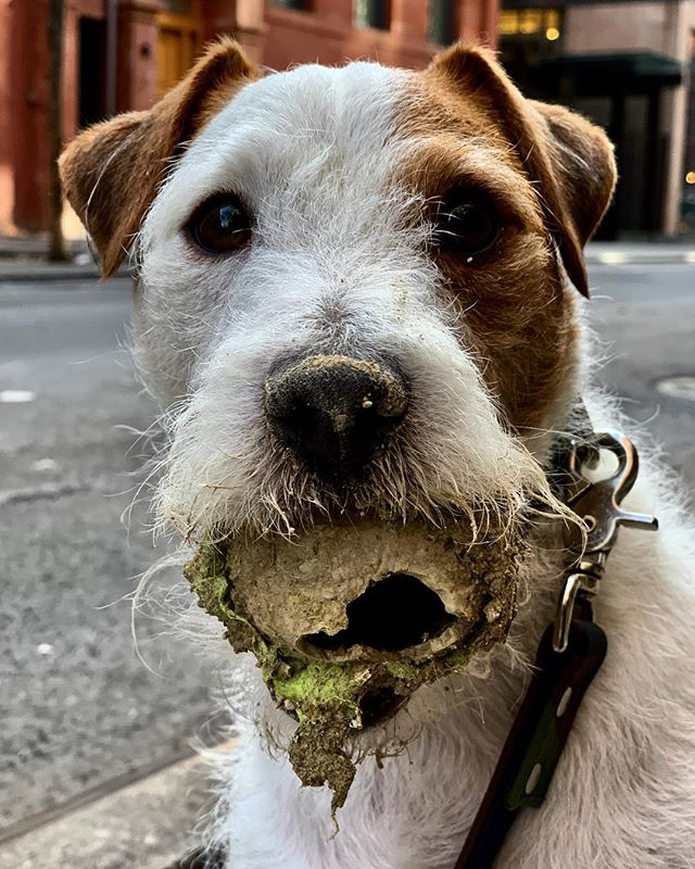HAVE A BALL! #newyork #new #year #2019 #love #life #thepursuitofhappiness #dogs #rule #f*ck #trump #usa