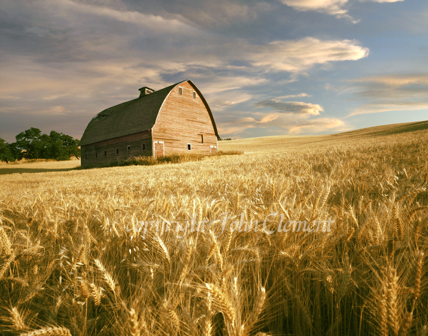 Barn and Wheat - Palouse