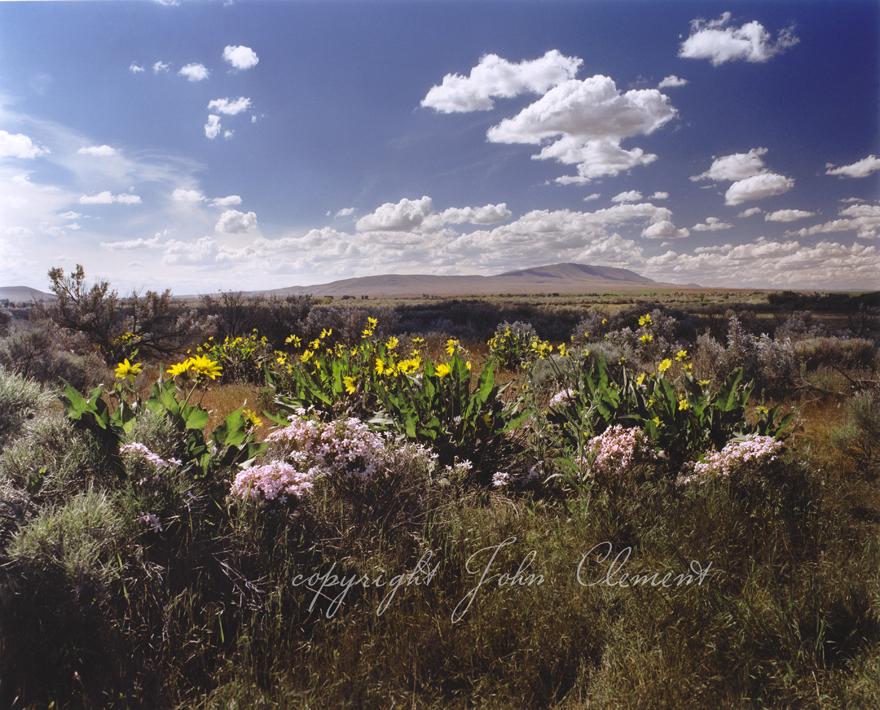 Rattlesnake Mountain Spring