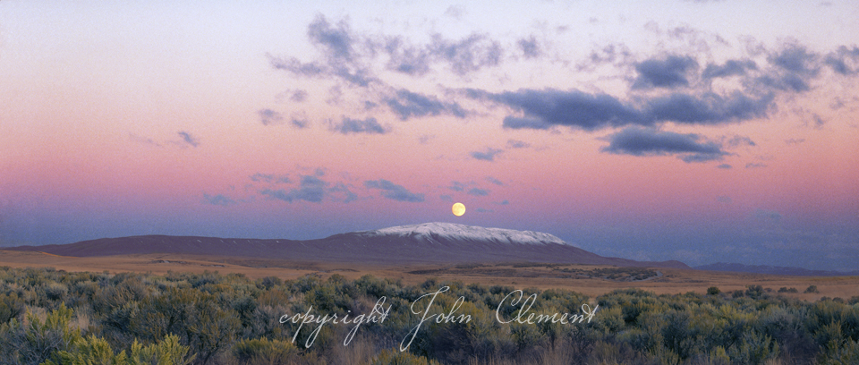 Winter Moon Sagebrush