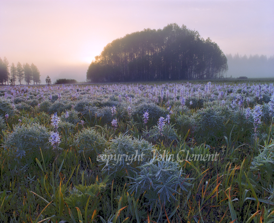 Camas Prairie Morning