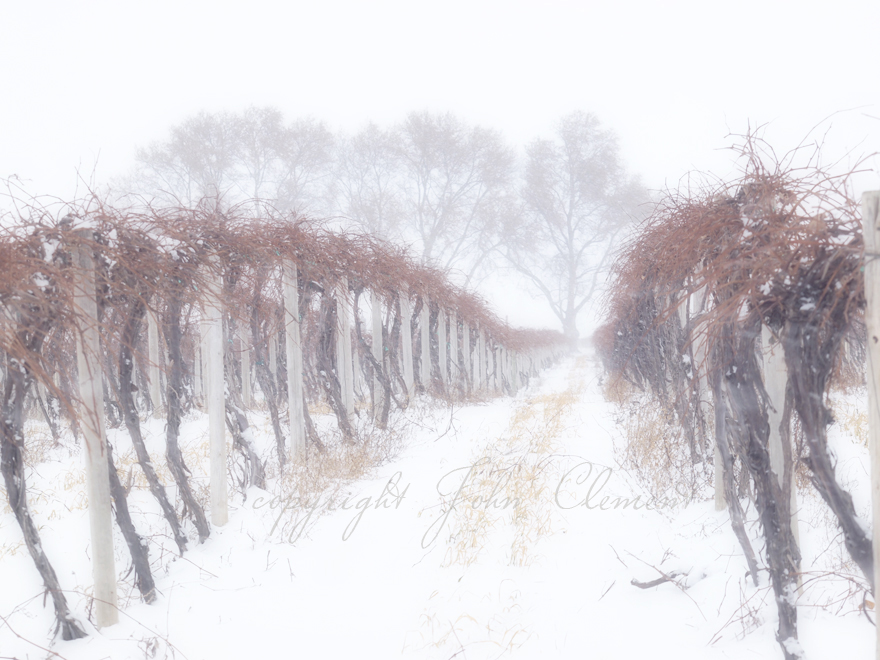 Blizzard in the Vines