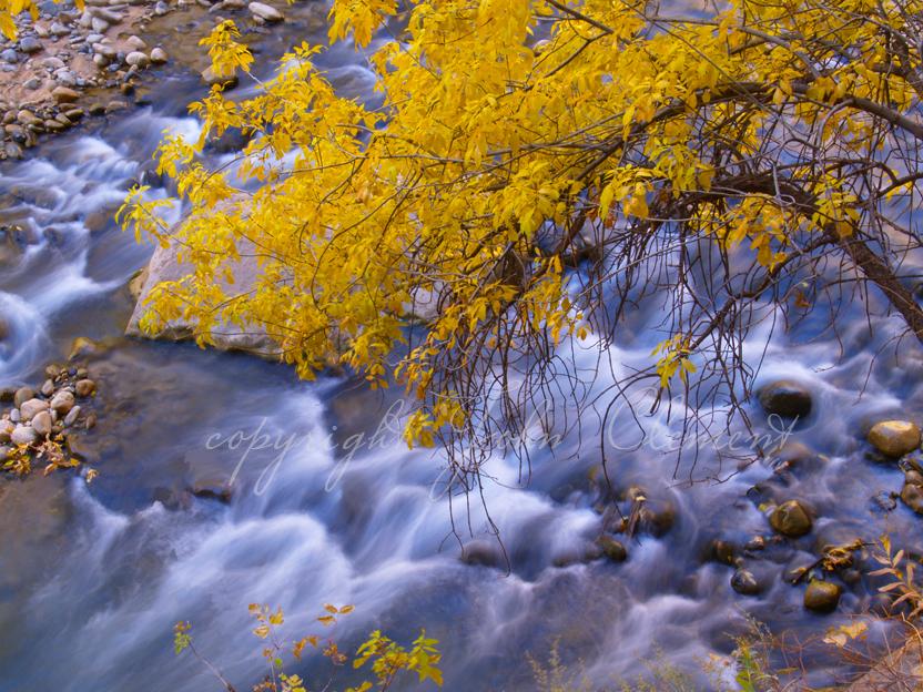 Fall Rush