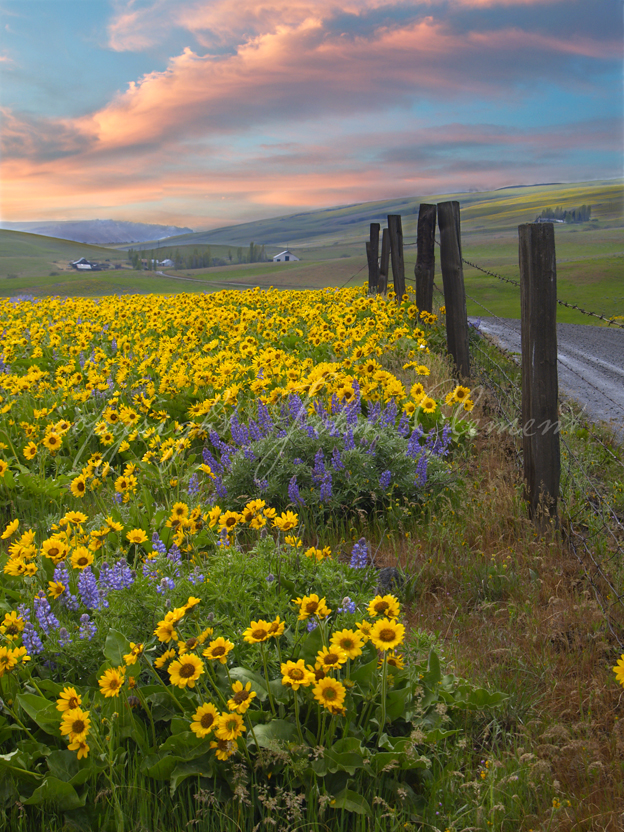 Dalles Mountain Road Twilight