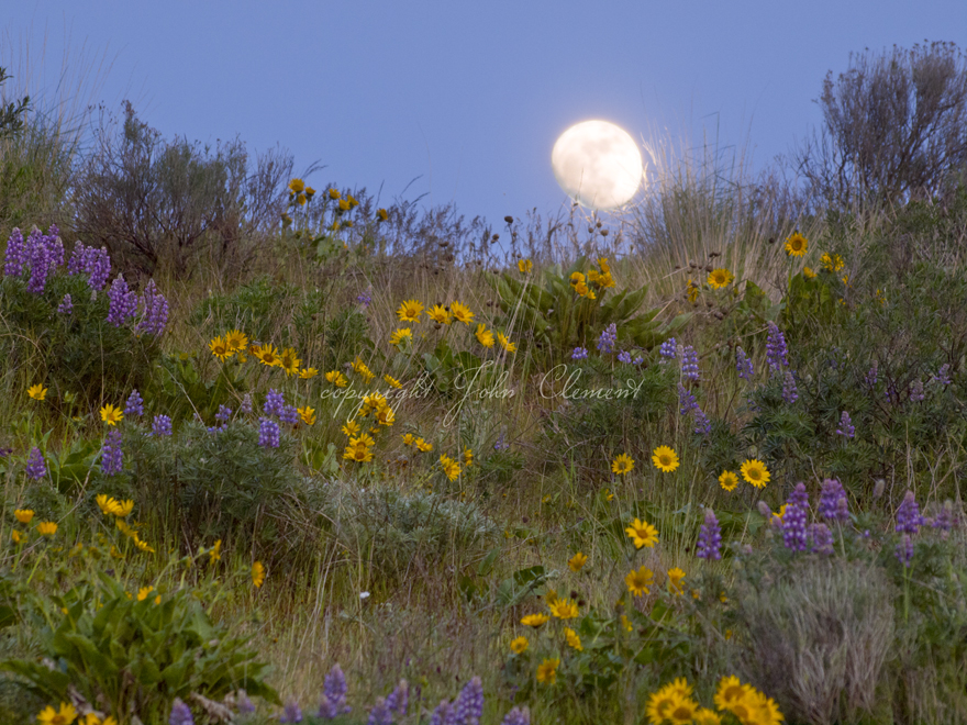 Flowered Moon
