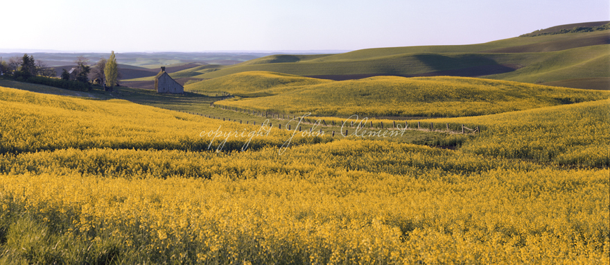 Palouse Country Barn - Canola Spring