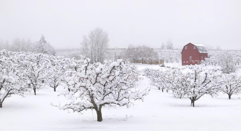 Laraway Barn Winter
