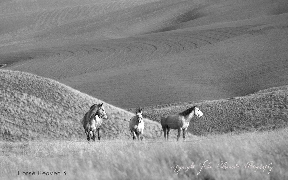 horse heaven 79.jpg
