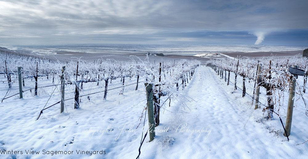 winters view sagemoor vineyards.jpg