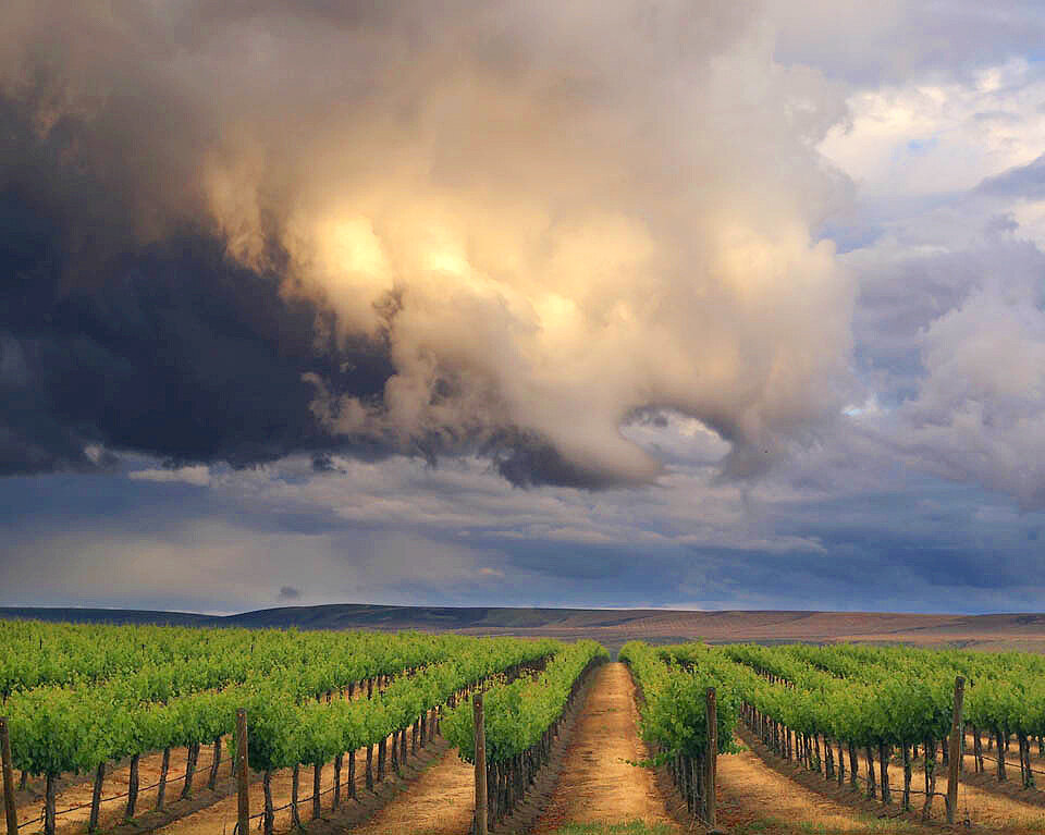 Storm Vines IV