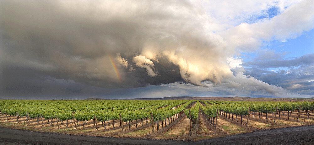 Stormy Vines