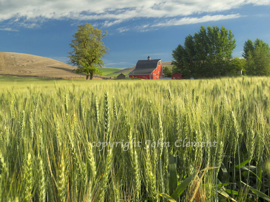 Red Barn and Spring Wheat