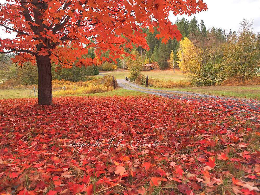 Fall Red