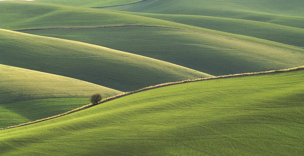 Hill Line II
