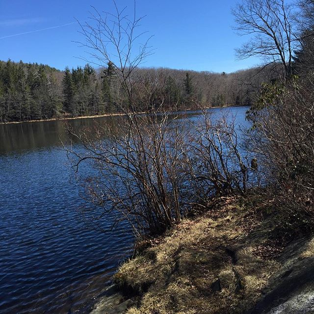 Benedict Pond, Beartown Forest, MA. We didn't see bears.