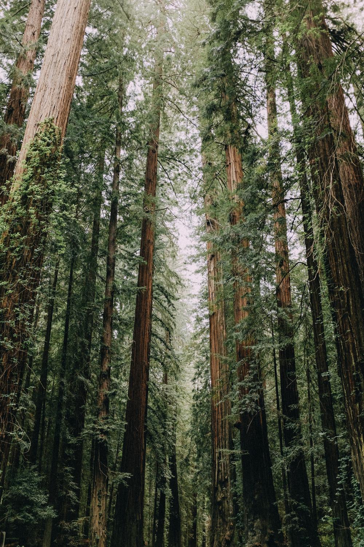 Fuji-x100t-California-113.jpg