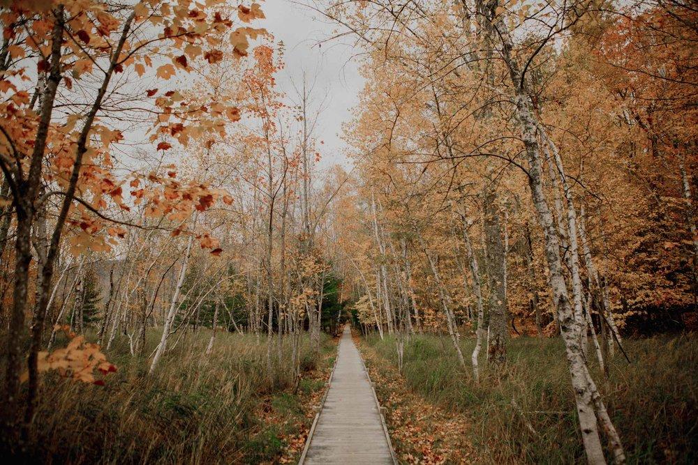 Acadia-Elopement53.jpg