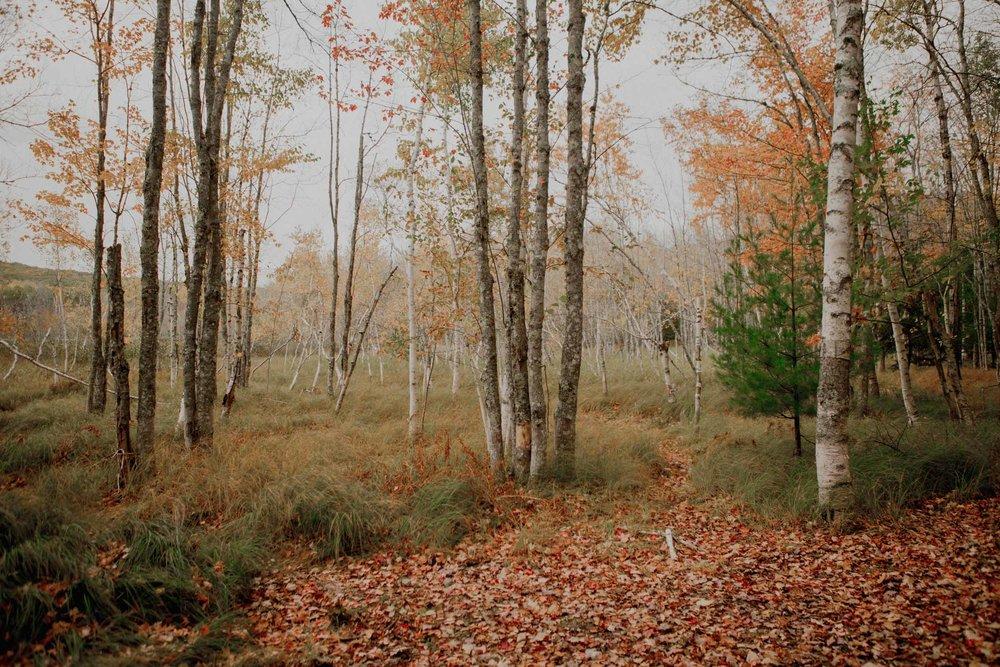 Acadia-Elopement77.jpg