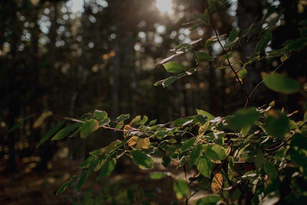 Acadia-National-Park-Elopement30.jpg