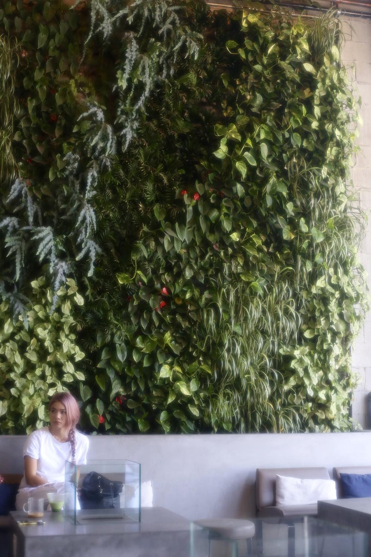 american-tea-room-plant-walln.jpg