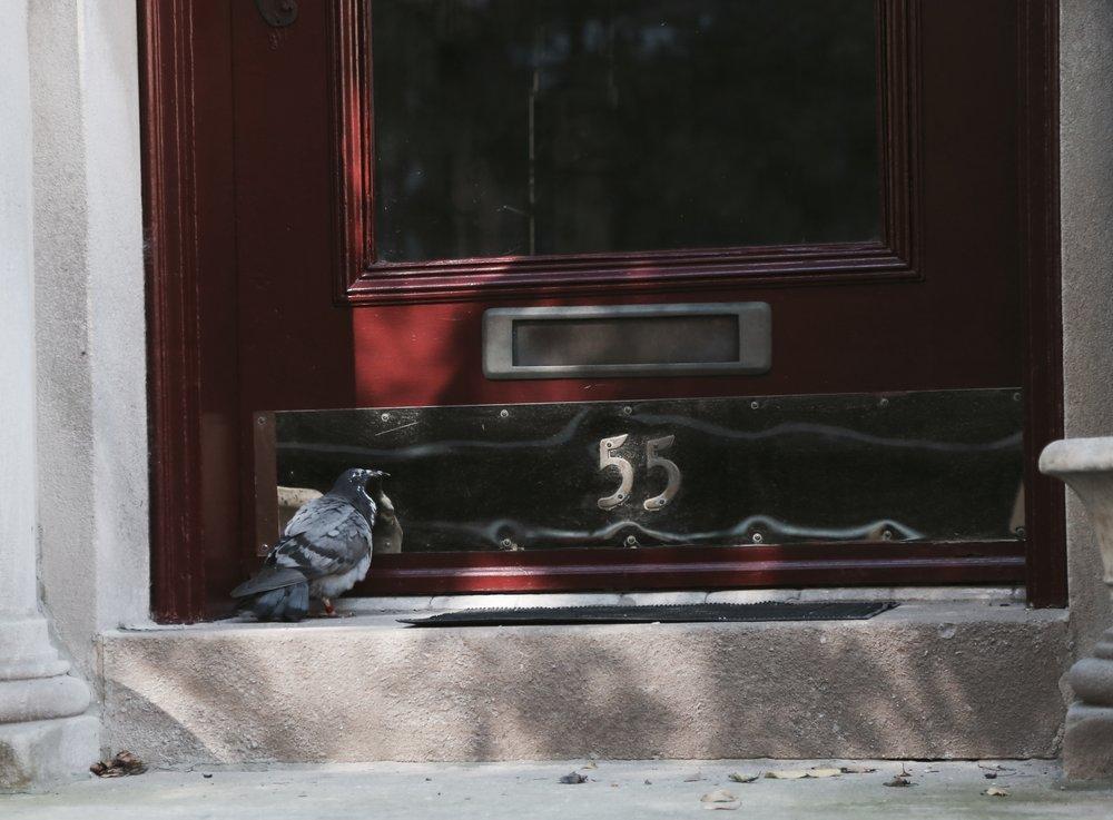 pigeon-mirror.jpg