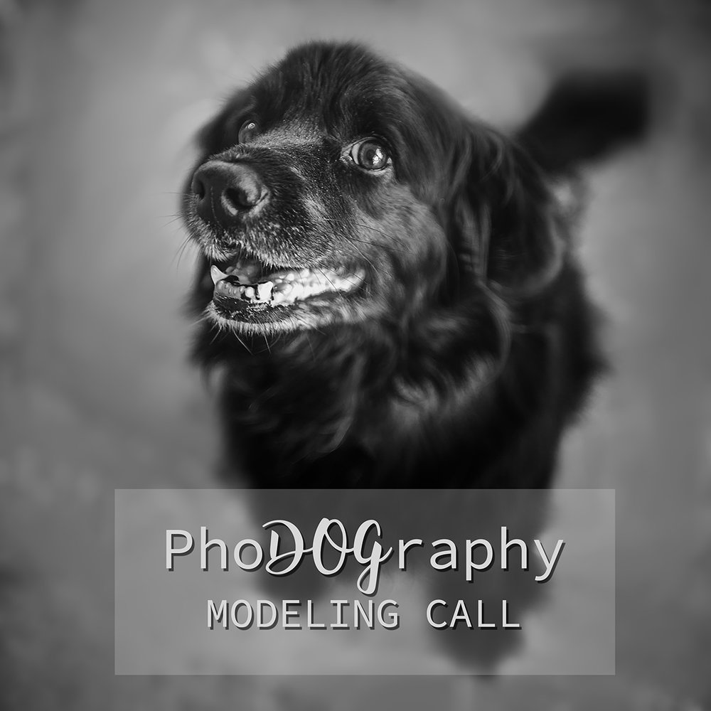 Meet Mojo, a 13 year old Cocker Spaniel and black Labrador mix. She loves her family and soft food! That's a good girl, Mo!
