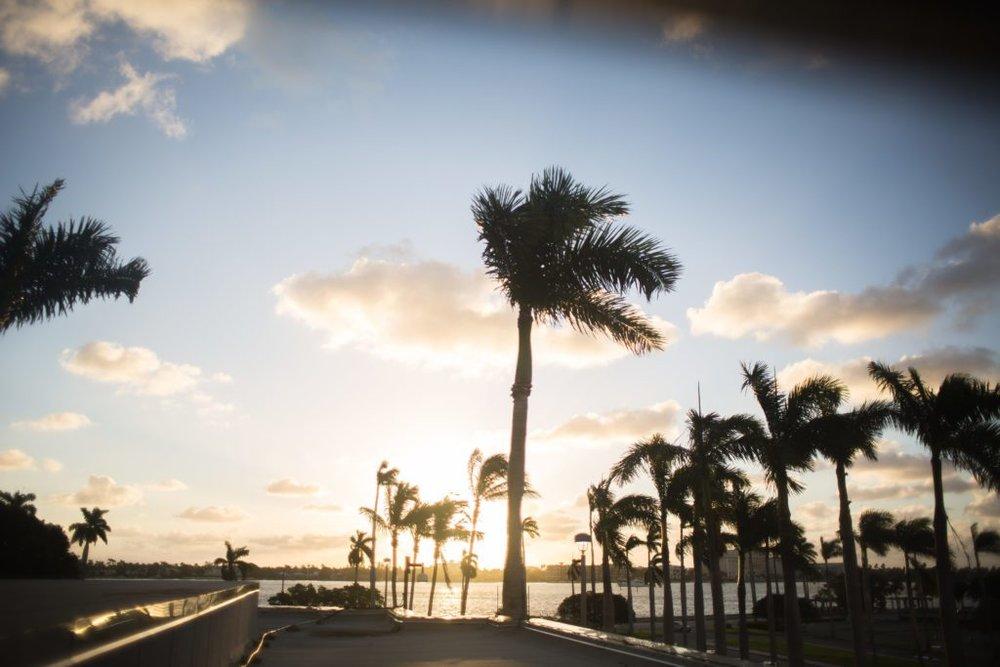 south florida living palm trees