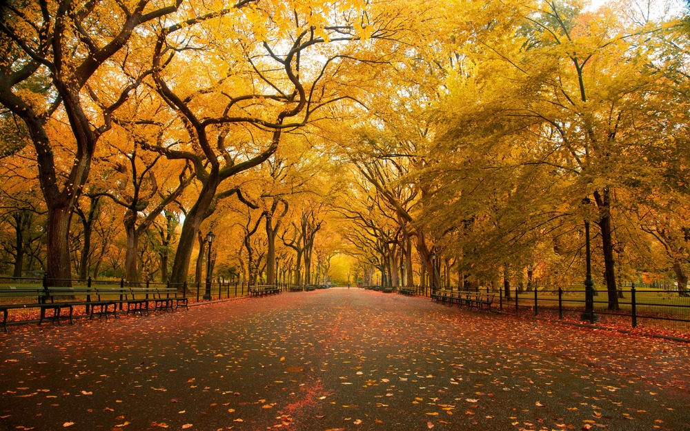 the-welcome-blog-tours-of-new-york-central-park