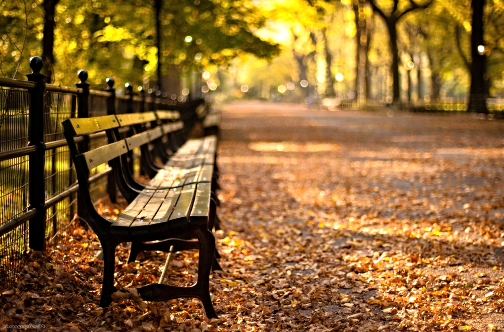 More than 9,000 benches in Central Park