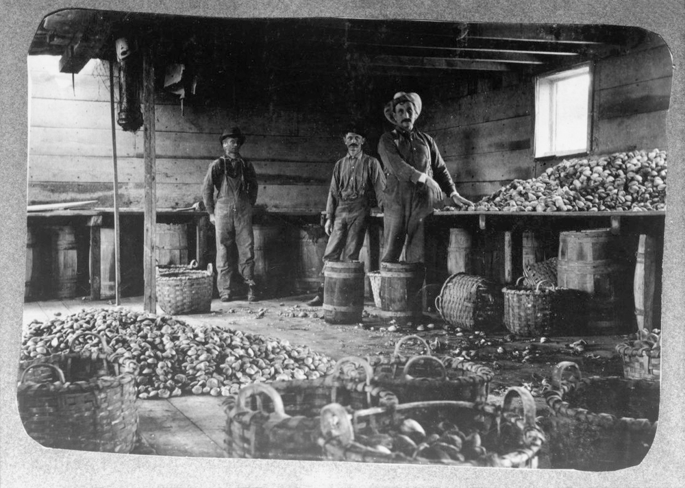 Workers  on Oyster Bay circa 1890. Image: NYPL