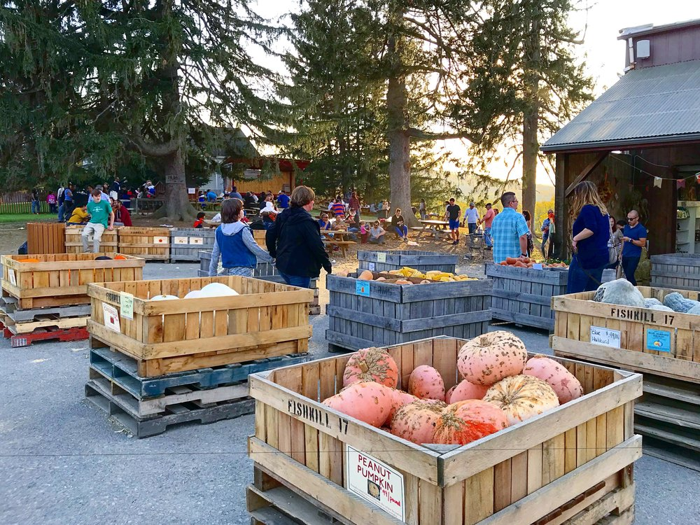 The Farm - You can buy organic produce, pumpkin, apples, homemade pies &more!