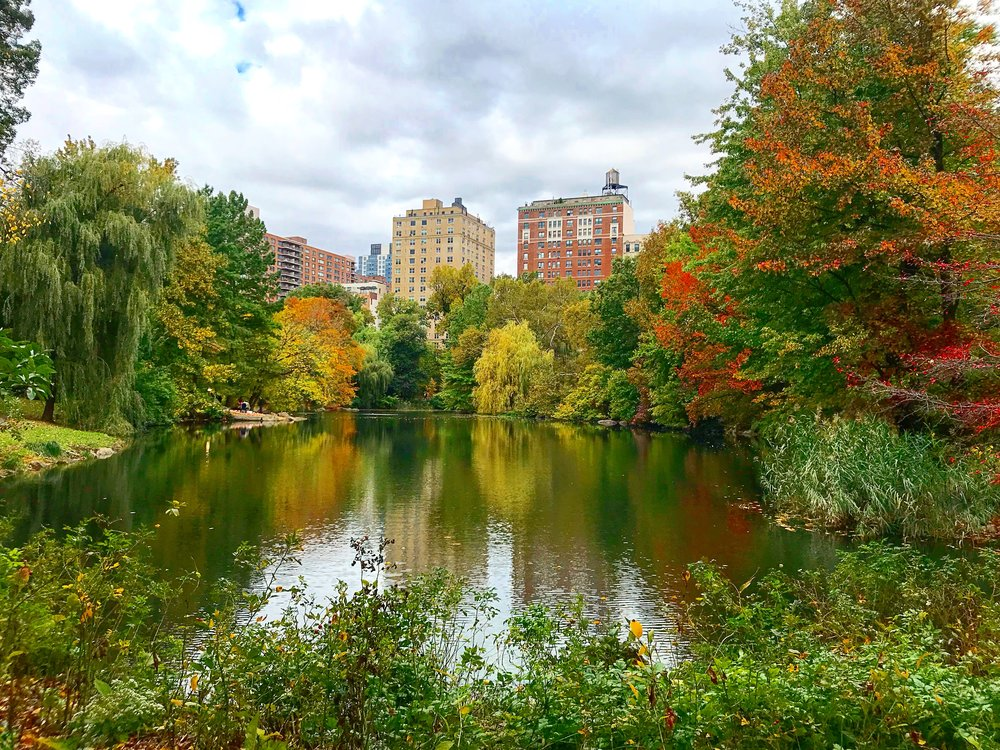 Central Park -The Pool, 100th Street on the West Side - October 26th 2017