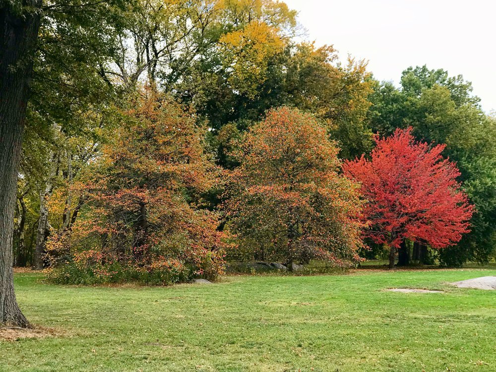 Central Park, 100th Street Baseball Fields on the West Side -October 26th 2017.