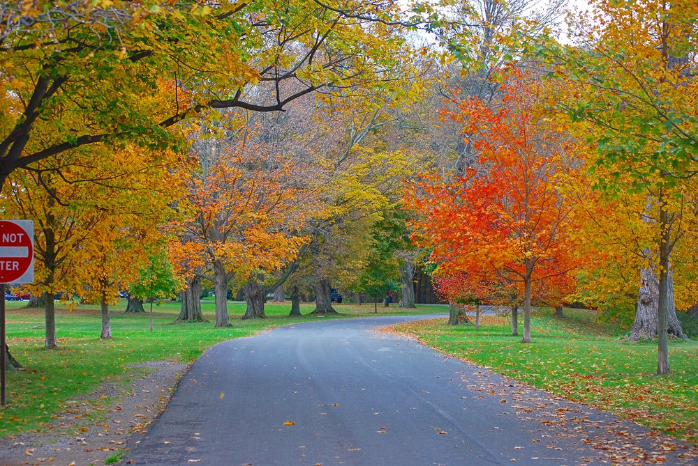Hyde Park, NY. Vanderbilt Mansion Road - October 25th, 2017.