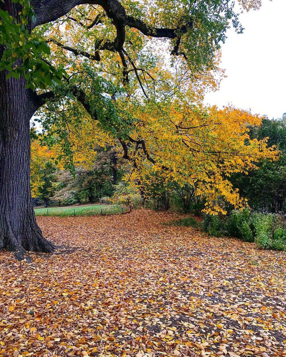 Central Park, 97th Street Transverse & 5th Avenue - October 26th, 2017.