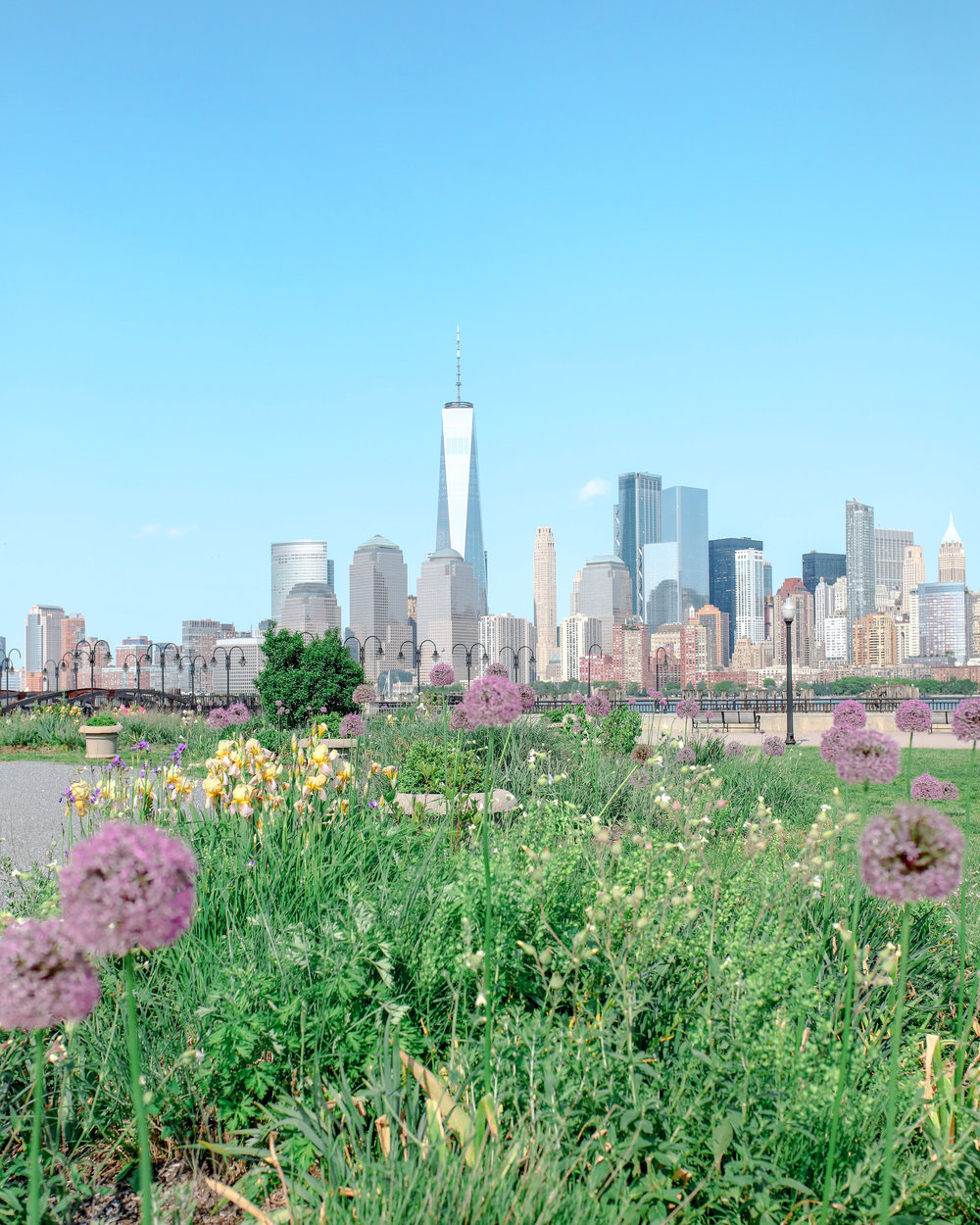 Flowers and the Freedom Tower
