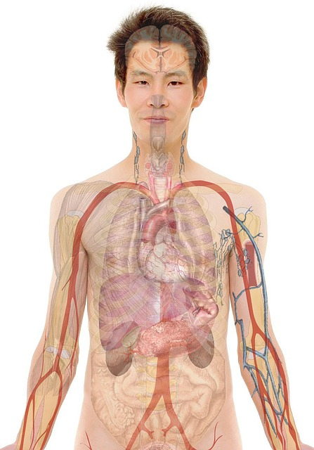 This is a human body.  It's made of organs. Heart, lungs, brain, liver... you get the idea. -