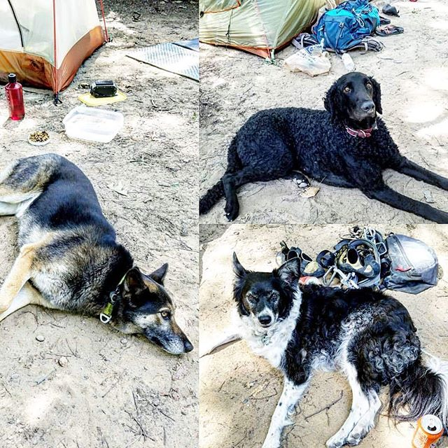 Off leash weekends climbing and camping. Three good and tired buddies. Book a Skype or in person dog training session for help with off leash obedience.  @lifedogtraining #dogsofatl #dogsofatlanta #dogsofinstagram #hikingdog #camping #climbing #climbingdog #cragdog #campingdogs #bordercollie #bordercolliesofinstagram #curlycoatedretriever #curlycoatedretrieversofinstagram #germanshepherd #germanshepherdsofinstagram #offleash #offleashhiking #dogtraining #offleashdogtraining