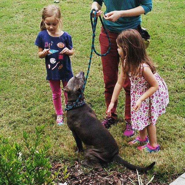 Practicing sits and socializing around kids with the help of these two little trainers. This beautiful boy is six months old and doing great. @lifedogtraining #staffordshirebullterrier #dogsofatl #dogsofatlanta #dogsofinstagram #dogtraining #puppy #puppiesofinstagram #sit #kidsanddogs