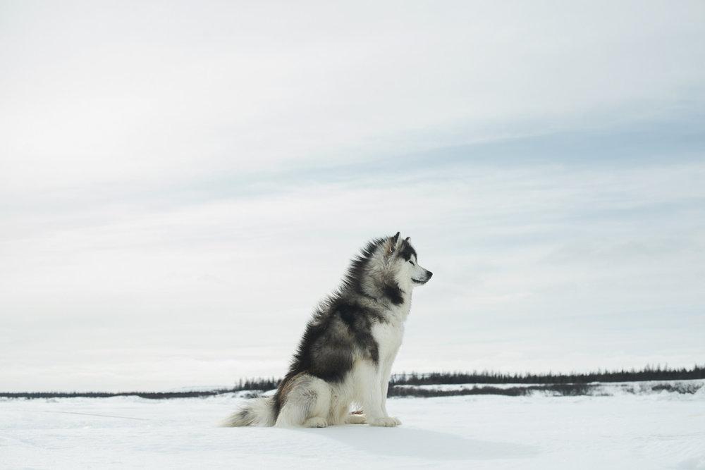 2016_04_Kuujjuaq-07640.jpg