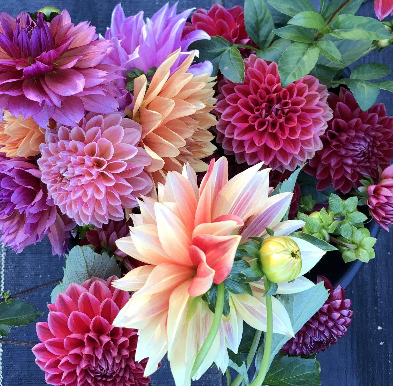 Dahlia Grab Bag Fruition Flowers