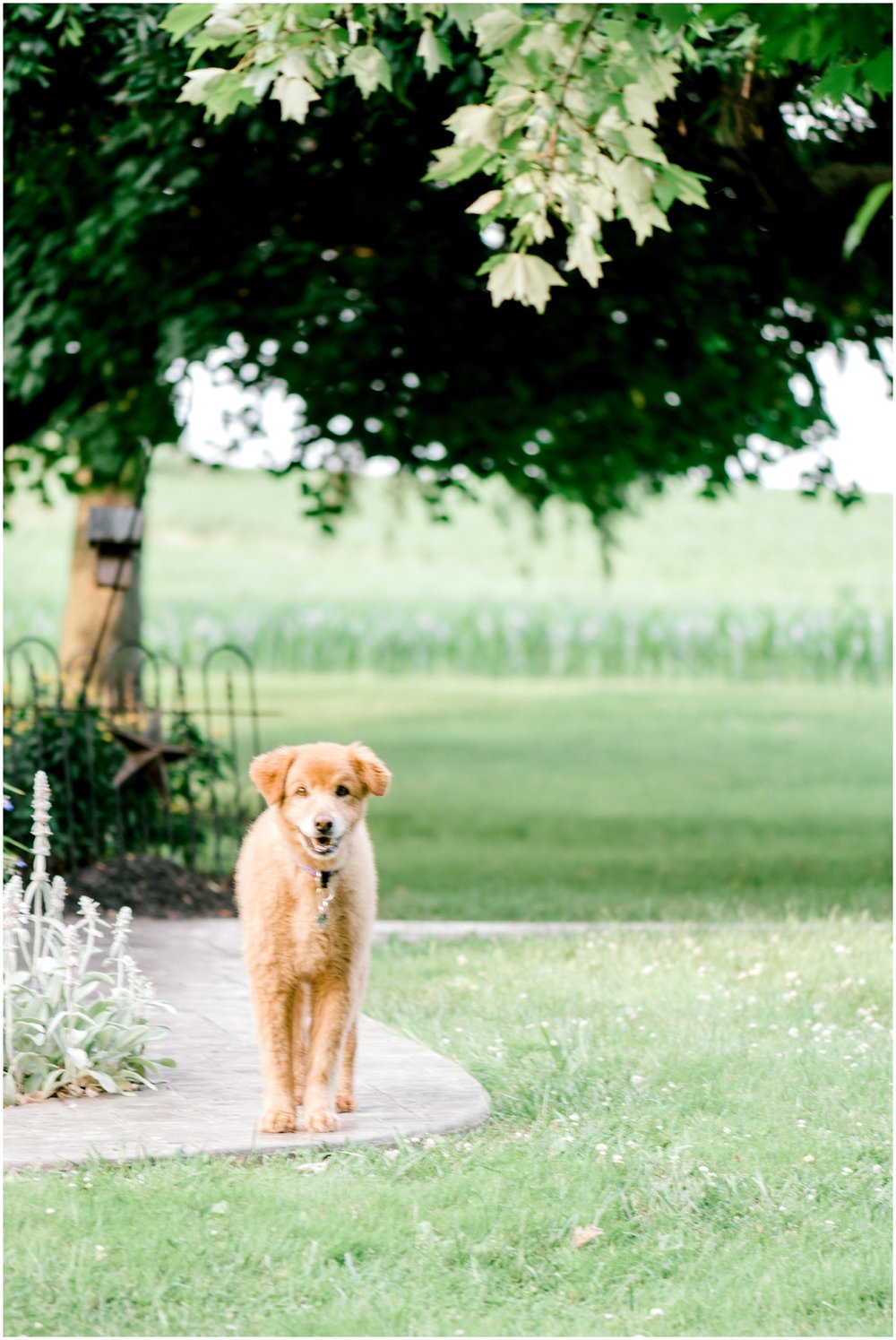 Summer Private Farm Engagement Session - Krista Brackin Photography_0010.jpg