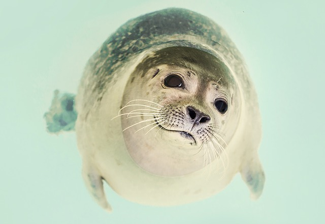 I believe this is actually a seal. Whatever, it's cute and I don't discriminate.