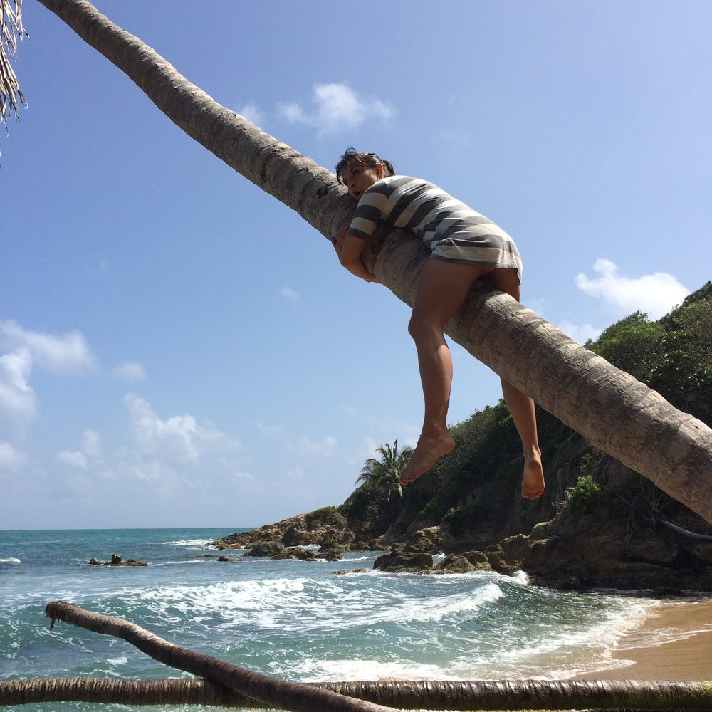 Last year, I took myself to Puerto Rico for my 30th birthday. While I was there, Remote Year emailed to tell me I'd been selected for an interview, so I climbed a coconut tree in response because it seemed safer to deal with my feelings up there.