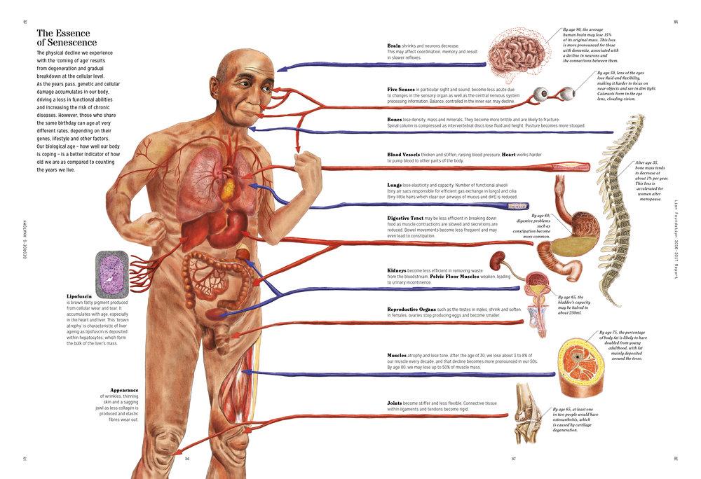 George-Anatomy-LFAR-19.jpg