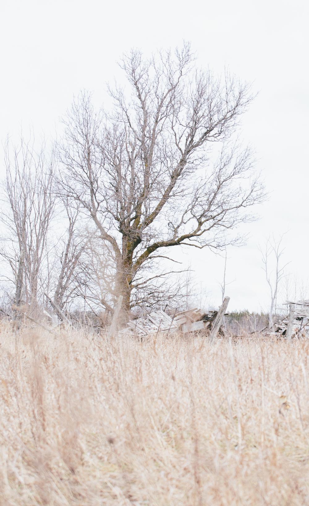 Spring_Morris_Photography_Toronto_Driedflowers-1-8.jpg