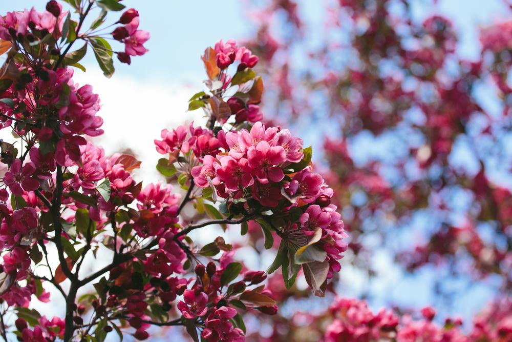 Spring_Morris_Photography_Toronto_Flowers-1-5.jpg