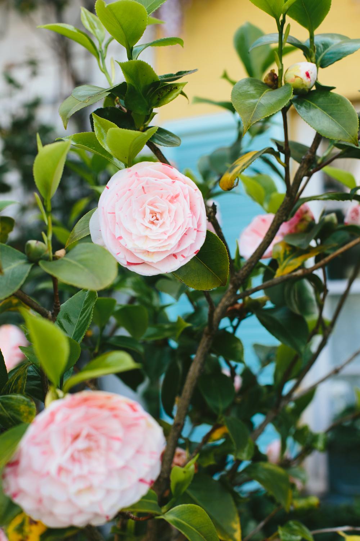 Spring_Morris_Photography_Toronto_London_Spring-1.jpg