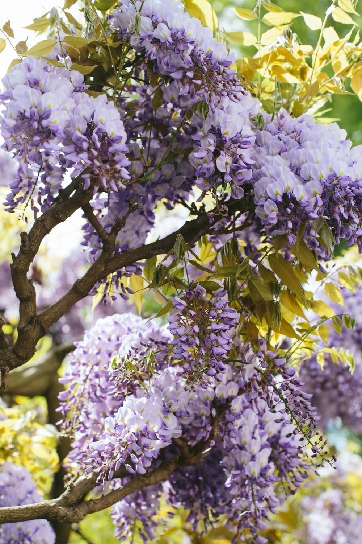 Spring_Morris_Photography_Toronto_London_Spring-1-5.jpg