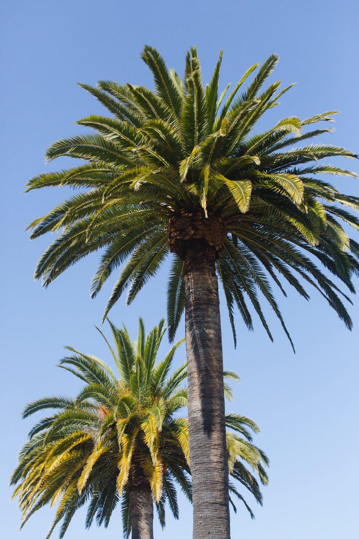 Spring_Morris_Photography_Travel_San_Francisco-1-26.jpg